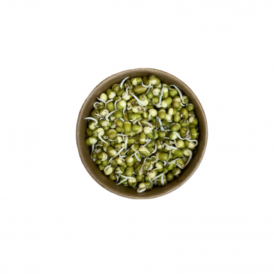 Daigintos spindulinės pupuolės, Žali Žali, 120 gr.