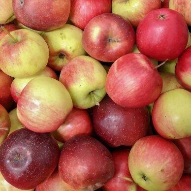 Lietuviški obuoliai (įvairūs), 1 kg. 2