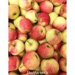"""Obuoliai """"Auksis"""", 1 kg."""