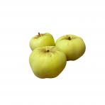"""Obuoliai """"Bogatyr"""", 1 kg."""