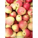 """Obuoliai """"Jester"""", 1 kg."""