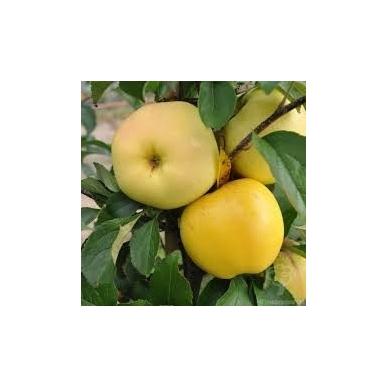 """Obuoliai """"Ananasiniai"""", 1 kg."""