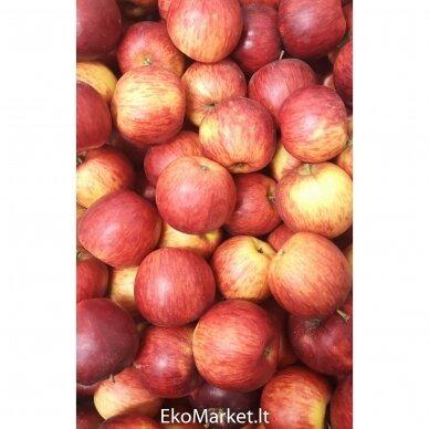 "Obuoliai ""Rubin"", 1 kg."