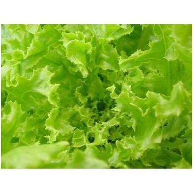 Salotos lapinės, 100 gr.* 2