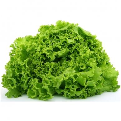 Salotos lapinės, 100 gr.*