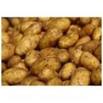 Bulvės (VIDUTINĖS), 5 kg.