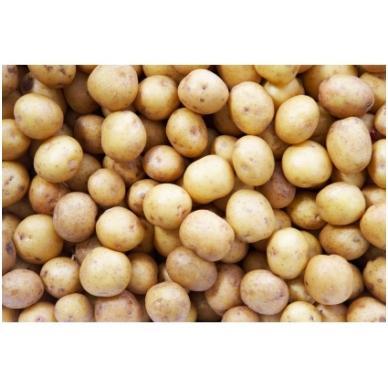 Šviežios bulvytės (MAŽOS), 1 kg.