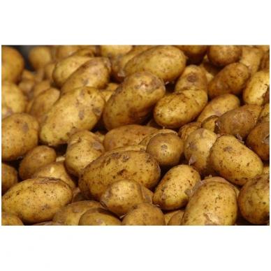 Bulvės (VIDUTINĖS), 10 kg.*