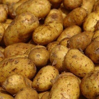 Šviežios bulvės (VIDUTINĖS), 1 kg.